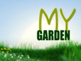 My Garden 16-05-2021